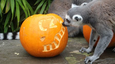 Get your face painted or take a virtual ride with the ghosts at the Shriek Week at Colchester Zoo