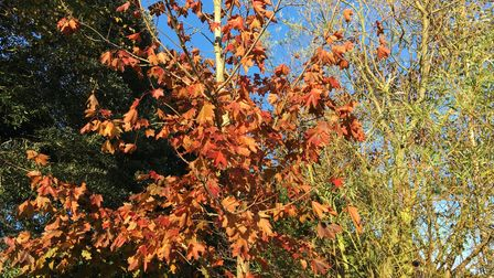 Autumn glory on parade as it gets late earlier