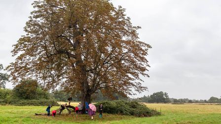 Children in Chatteris use Wenny Road Meadow to play with friends, walk dogs, search for conkers, climbing trees.