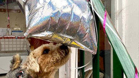 Elsie the dog inspects the balloons given to Jill and Michael
