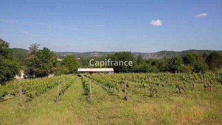 Grapevines in France for sale