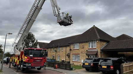 A fire crew rescued a cat from the roof of a Colchester home