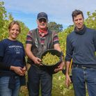 Flint Vineyard directors Hannah Witchell, Adrian Hipwell and Ben Witchell on their vineyard in Earsh