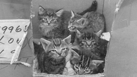 Rescued cats by RSPCA Norfolk