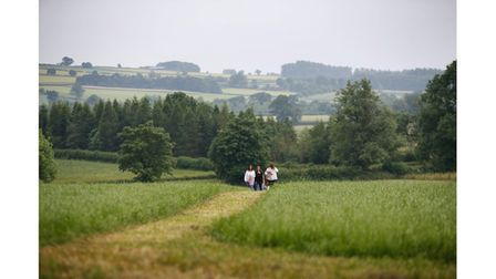 The green, rolling landscape of the Cotswolds