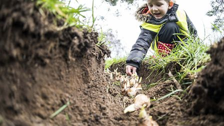 The reception class pupils from Nelson Acadmey take part in a big bulb planting in Clackclose Road i