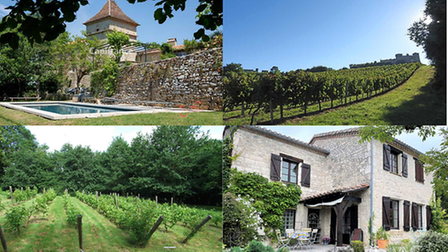 French vineyards for sale in France