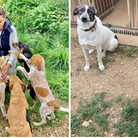 Rescuing European Animals in Need, based near Dereham, saw a huge upsurge in enquiries for dogs during lockdown