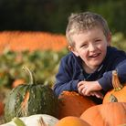 Four-year-old Cody Andrews collecting pumpkins at Algy's Farm Shop at Bintree. Picture: DENISE BRADL