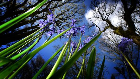 Bluebell Wood Burial Park. Picture: ANTONY KELLY
