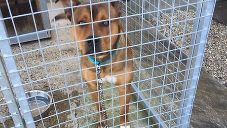 Dog found by Breckland Police in Thetford on April 19.