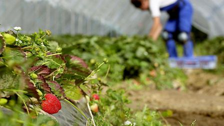 Labour-intensive fruit and vegetable growers are facing the financial impacts of the National Living