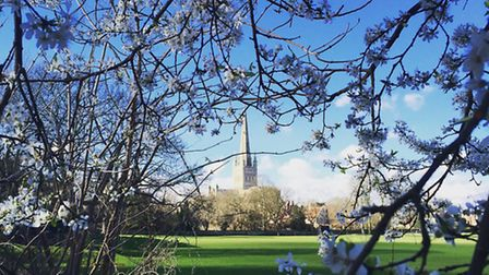 Spring has arrived at Norwich Cathedral