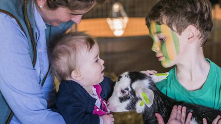 The Kids Meet Kids event at Fielding Cottage in Honingham. Picture: Matthew Usher.