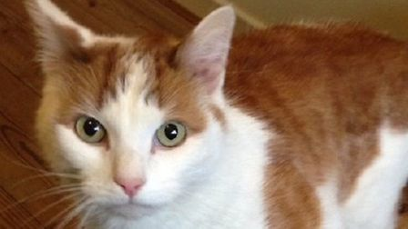 Could Gingerbread be your new pet cat?