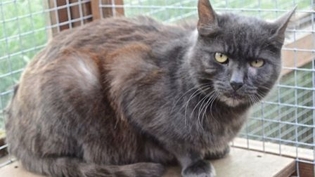 Could you give Mister Grey a new home?