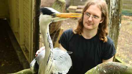 David Carr with the heron which was shot with an airgun.Picture: James Bass