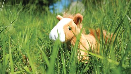 A fenland grazing pony toy which will be given to those who sign up to the Broads Authority's new Po