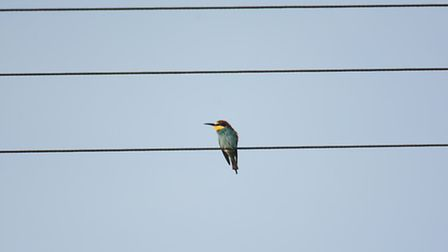 A photo of a rare bee-eater at Winterton in the morning of Thursday, May 12. Photo: Mick Davis