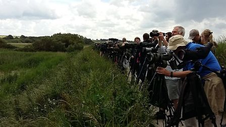 Twitchers flock to Titchwell to see the Great Knot. Picture: Paul Eele