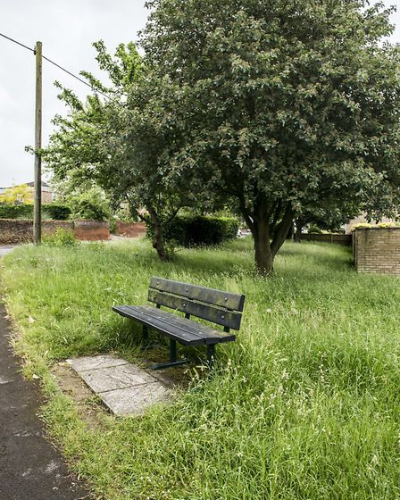 The over grown grass area on London Road in Downham Market. Picture: Matthew Usher.