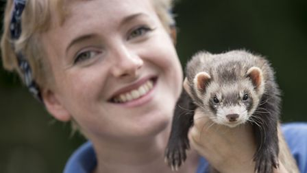 Scenes from the PACT Open Day 2016 in Woodrising - Fletcher the Ferret with Anne Armitage. Picture: