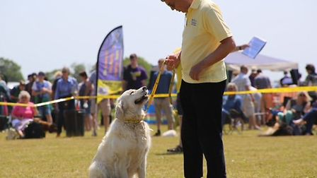 Fun Day at Dogs Trust Snetterton. Pictures by Olivia Kingsley.