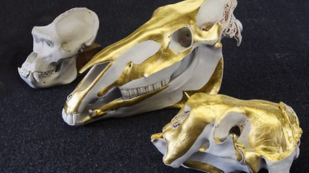 Three of the porcelain animal skulls created by artist James Webster which are being gilded by Tom H