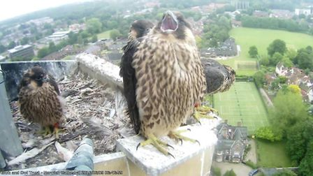 Chick 43 preparing to fly early on Thursday morning