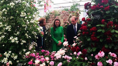 The Duke and Duchess of Cambridge, and Prince Harry, visit the Peter Beales Roses display at the 201