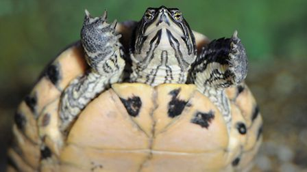 Terrapin evicted for bullying crocodiles: Pictures www.photo-features.co.uk