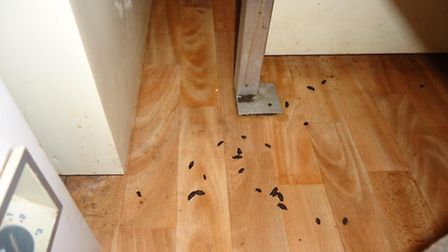Rat droppings found at Energy restaurant on Marine Parade, Great Yarmouth