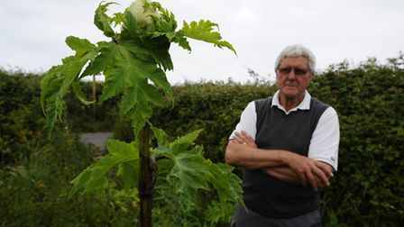 Giant Hogweed which is growing along Water Lane in West Runton. Local resident Terry Miller (picture