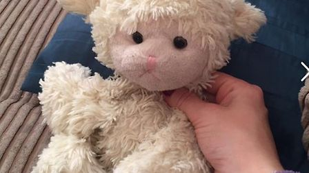 Lamby, who was lost at the Royal Norfolk Show on Wednesday.