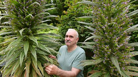 Richard Howard who has a tall echium growing in his garden in Ormesby.Picture: James Bass