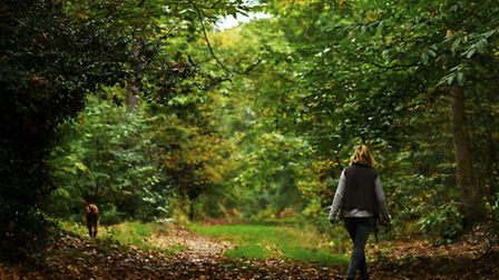 Autumnal Holt Country Park.Picture: MARK BULLIMORE