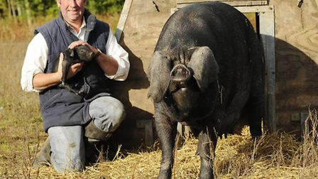 Breckland farmer Rob Simonds with his large black pigs. Picture: Ian Burt