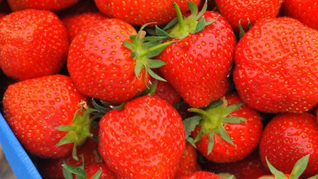 Pick your own strawberries at White House Farm. Photo: Steve Adams