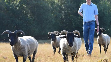 The Sheep in the Brecks project. Pictured: Ecologist and conservation grazier Nick Sibbett with his