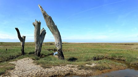 The stumps at Thornham harbour. Picture: Matthew Usher.