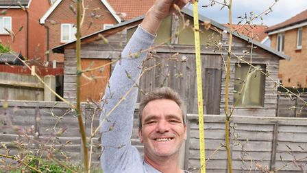 Wayne Daniels with his tall dandelion, measuring 85 inches to the highest stem, at his garden in Bow
