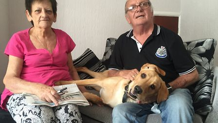 Jill and John Mason's dog, Brandy, has two displaced hips and has been ill since they got him.