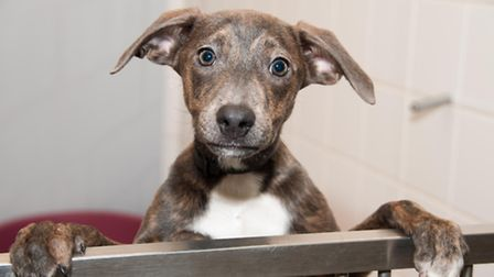 A Dogs Trust puppy.