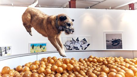 Border Terrier Bobbie jumps into 'Dinnertime Dreams' - an oversized 10ft dog bowl filled to the brim