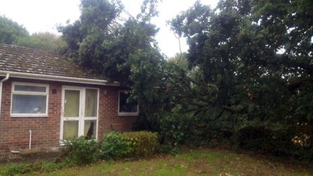 Saffron Housing bungalow on Damgate Street in Wymondham which had a branch of an oak tree fall on it
