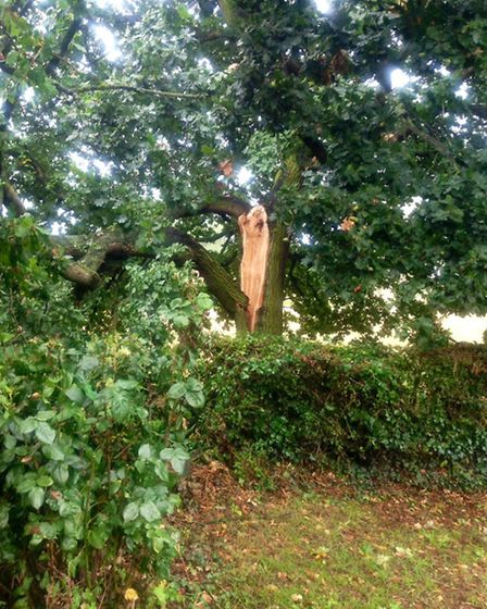 branch of oak tree which landed on bungalow roof in storms