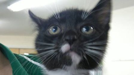 Can you give Adrian a new home?
