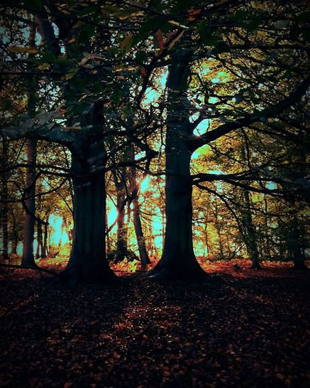 Stunning trees at Thetford by Jane Podmore