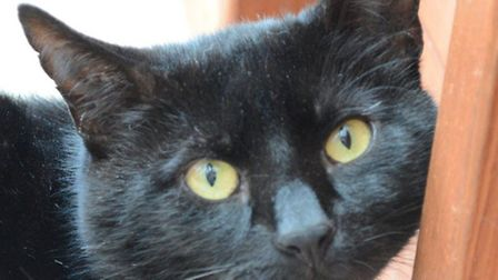 Can you give Chalky a new home?