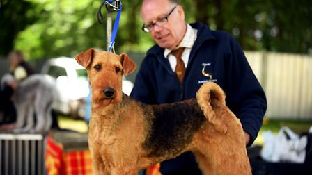 Royal Norfolk Show 2016.Dog Show.Picture: James Bass